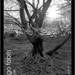 photomarket_invito